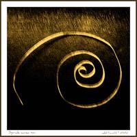 Spirale aurea by martaraff