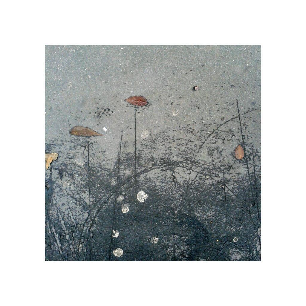 Leaves by martaraff