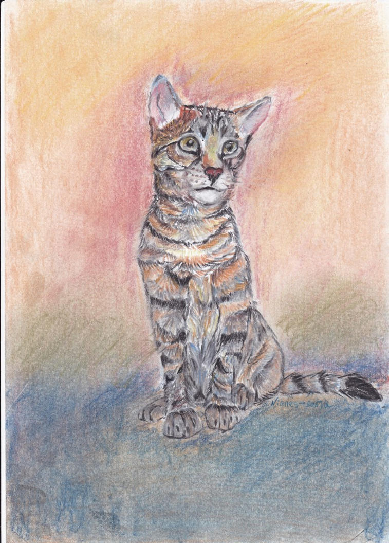 Kitty by Nianes