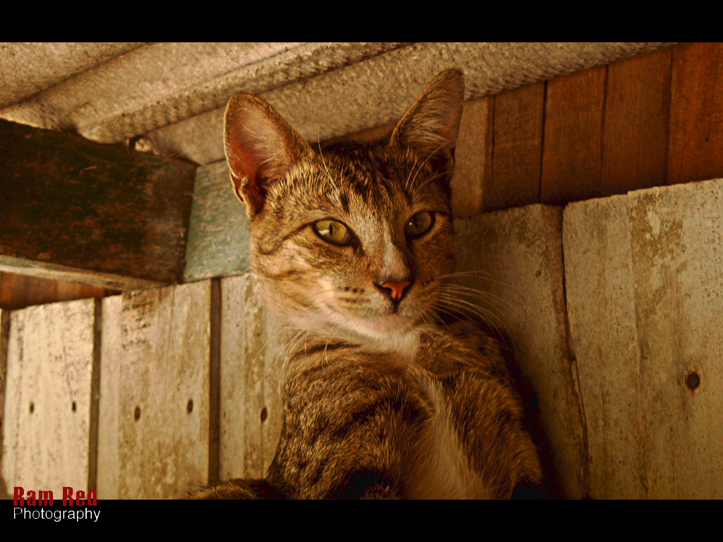 Cat under the roof by ofonesvanity