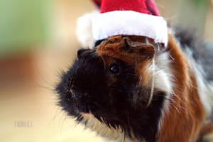 Christmas Guinea Pig by Cinnali
