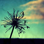 Beyond Blue by dendenli