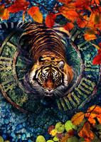 Tiger by Alex-View