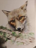 WIP fox 2 by Ebbenhorst