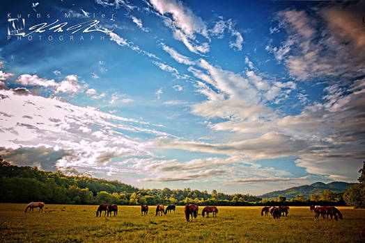 Heard of Trail Horses