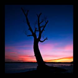 Old Tree - Silhouette by SorenWrang