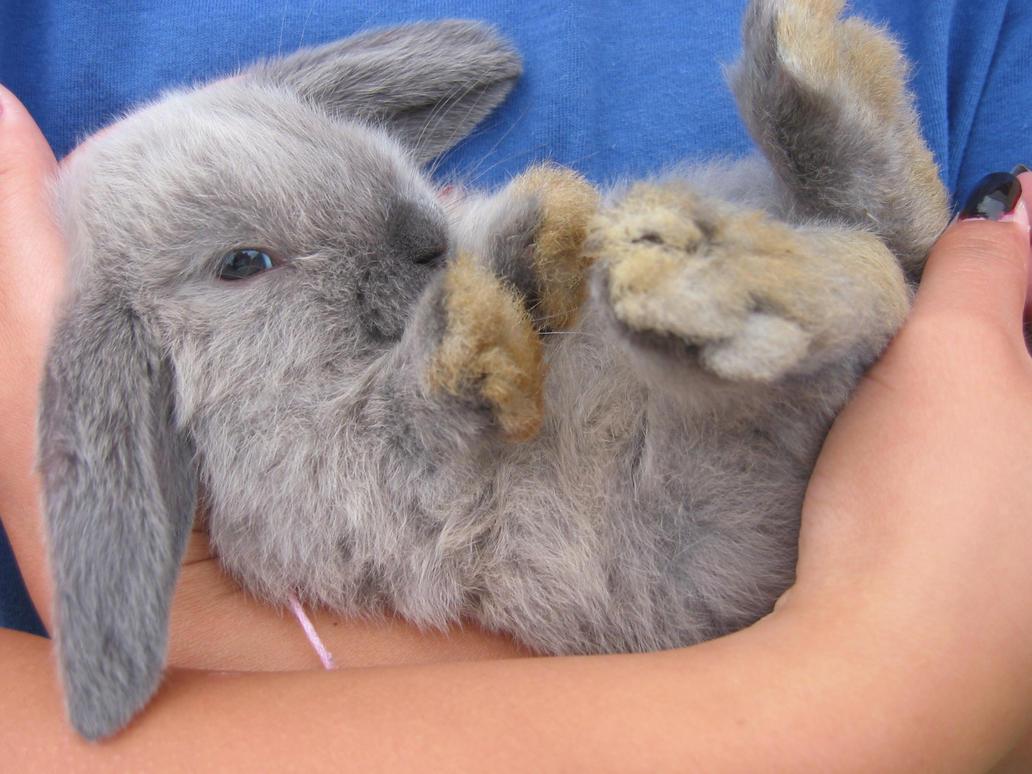 bunny by dancingdevil