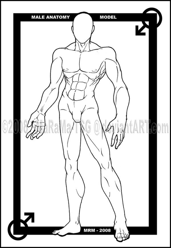 Old Fashioned Anime Male Anatomy Ideas - Human Anatomy Images ...