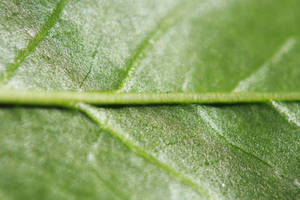 Macro leaf texture by BackXture
