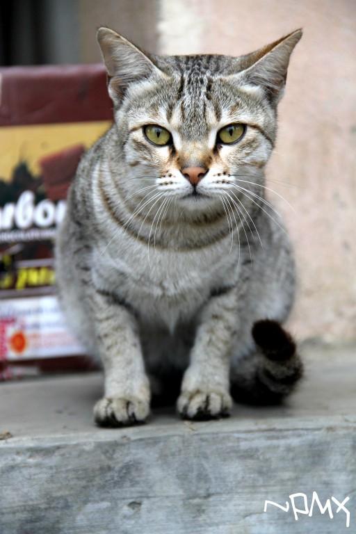 Cat's eyes by Pramin
