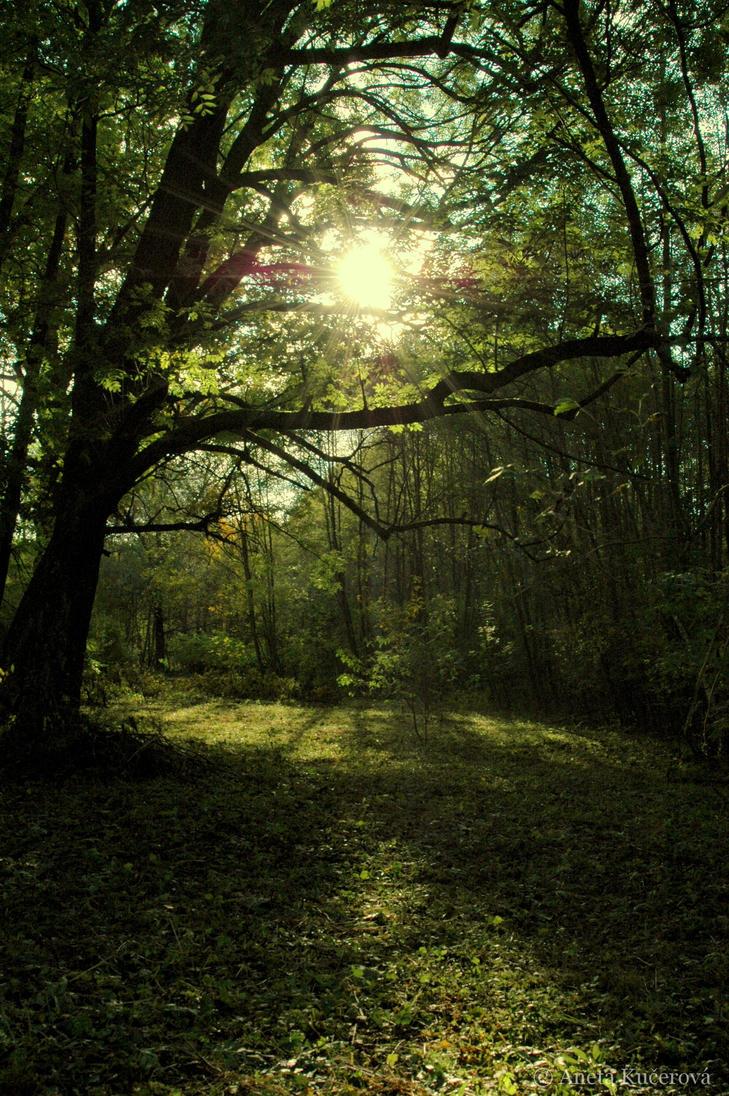 壁纸 风景 森林 桌面 729_1096 竖版 竖屏 手机