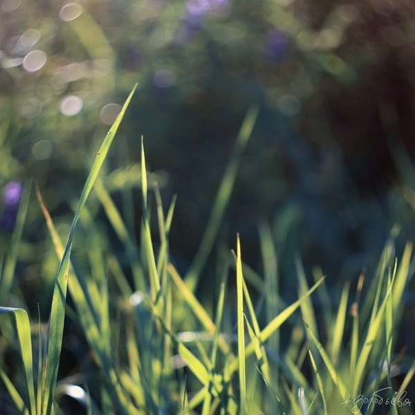Grass by silverwing-sparrow