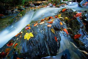 Wetfeet Creek