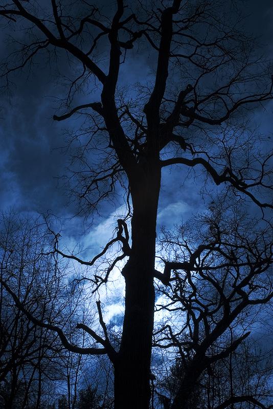 Oak tree by d-minutiv