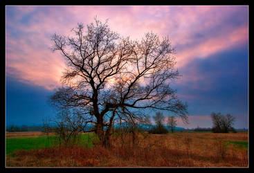 Glowing pink by d-minutiv