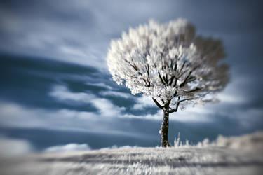A tree, baby