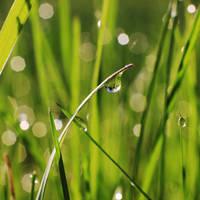 Morning dew by mstargazer