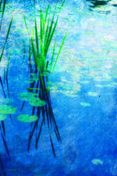 Ode to Monet' by mstargazer