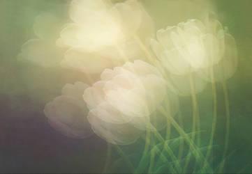 Petals in the wind by mstargazer