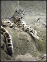 Uncia uncia - snow leopard by fUcKiTaLL