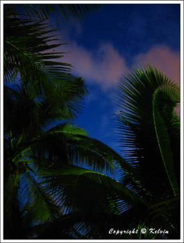 Sky and plants