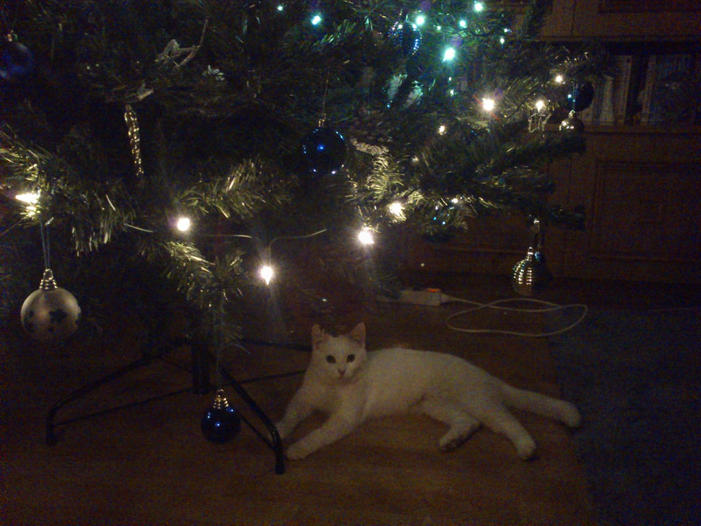 Gift under the tree by Anonymous---Lucifer