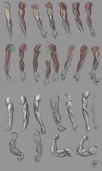 Brazos anatomia