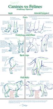 Canine v. Feline Anatomy Tut.