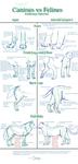 Canine v. Feline Anatomy Tut. by Daesiy