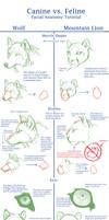 Canine v Feline Face Anat Tut.
