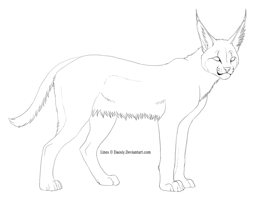Caracal drawing - photo#2