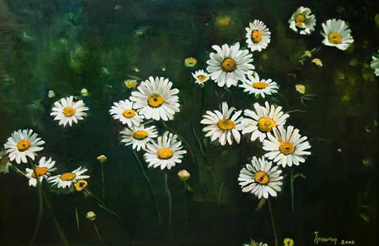 Golden Daisy... reproduction