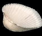 Shell by marphilhearts