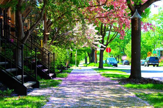 Blossoms on Sakura Street
