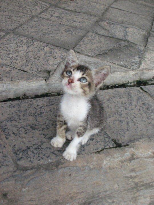 kitty by rumifalcon