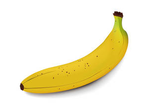Vector banana-The Monkey Song