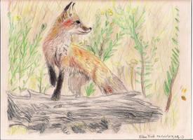 Red Fox by Kiaserliche
