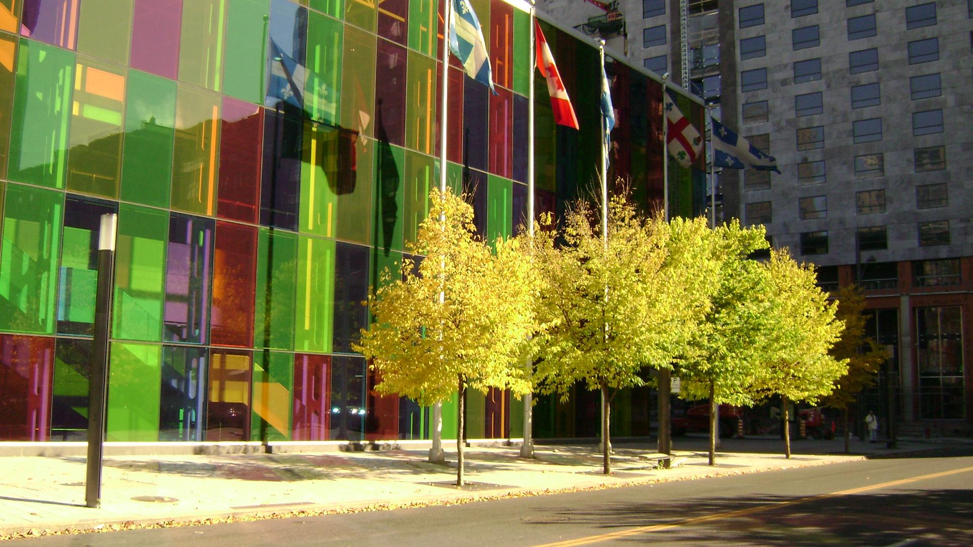 Maple trees by Katemoe