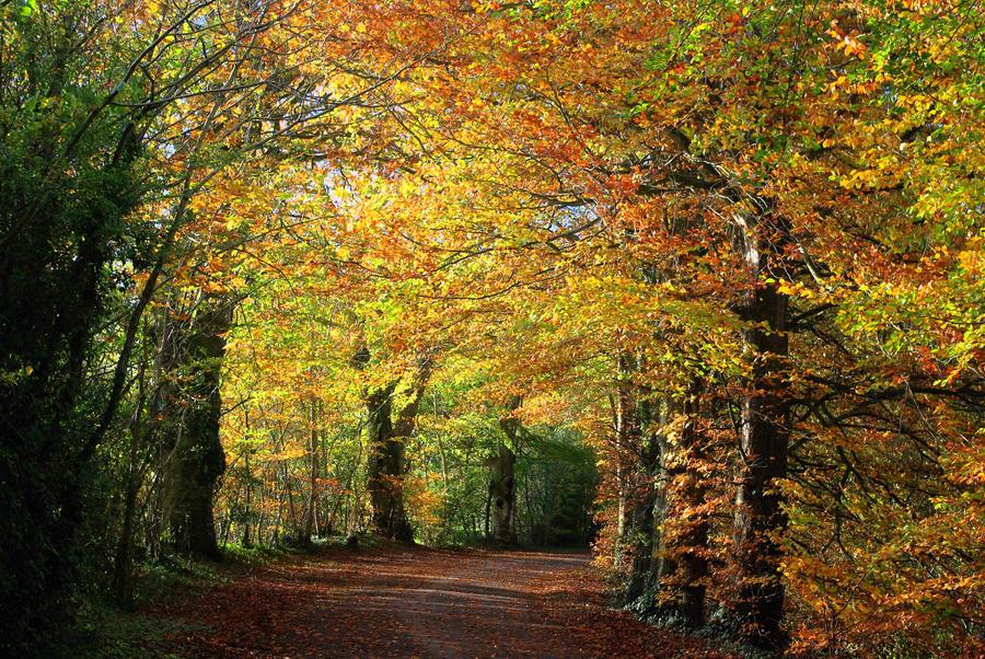 golden autumn by cheah77