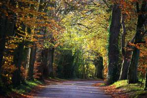 golden autumn--2 by cheah77