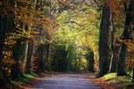golden autumn--2