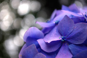 blue summer by cheah77
