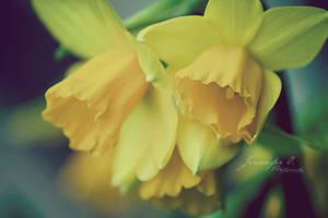 Spring. by deadstarx