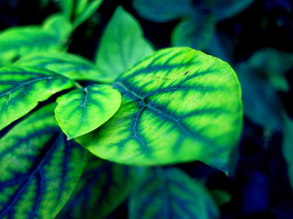 Leaf by mkrtchyan