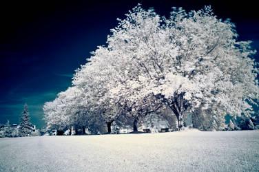 Summer Snow by bleaches