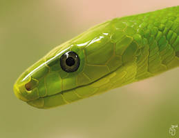 Green Mamba by DarkMasterOfDragons