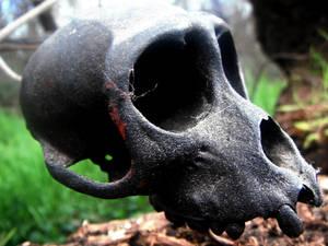 Floating Monkey Skull
