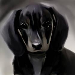 dachshund. by enemcore