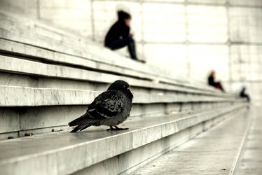 A bird's life by marialittle