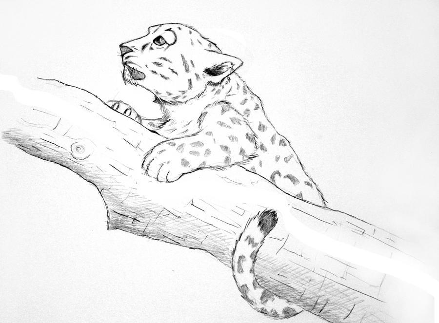 Snow Leopard Sketch By Albundyland On DeviantART